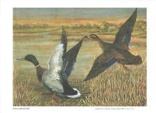 Mallard Ducks by A O Schilling 1931 Poultry Tribune Supplement Reprint