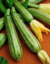 Zucchini Seeds, Italian Striped, Cocozelle Squash, Non-Gmo Heirloom Squash, 35ct