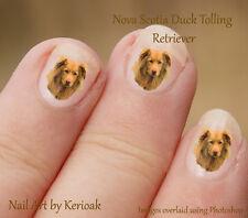 Nova Scotia Duck Tolling Retriever,  Set of 24 Dog Nail Art Stickers Decals