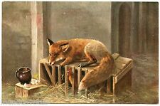 Beautiful Renard. Fox. Chasse. Hunting. Poulailler. Hen House