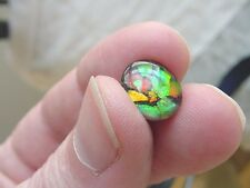 (J-490) Green orange Red mosaic Ammolite fossil shell loose cabochon nautilus