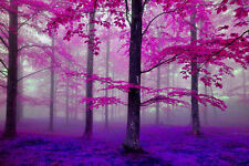 Framed Print - Pink/Purple Trees in a Dimly Lit Forest (Picture Poster Wood Art)