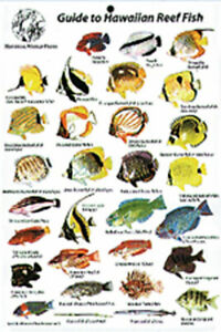 Guide to Reef Fish Hawaiian Islands ID Card Travel 6x9 NEW BK12