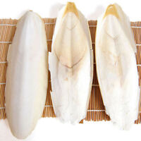 New Cuttlebone Cuttlefish Cuttle Fish Bone  Birds Rabbits Tortoise Food 1 Bag