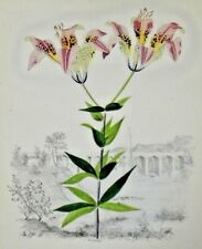 "Vintage Hand Colored Lithograph ""The Wood Lilly"" by Edwin Whitefield 7"" x 9.25"""