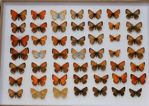 Stunning box of mixed European coppers, nice colour forms included