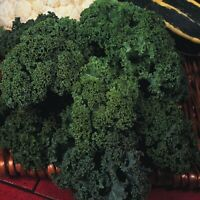 Organic Vegetable - Borecole / Kale - Westland Winter - 50 Seeds