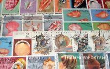 Motives 50 différents mollusques bivalves marches
