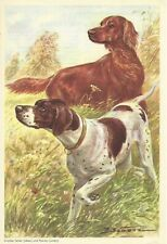 1960 Scholz Berlin Morning News Dog Art English Pointer Irish Setter