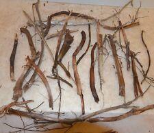 Moorkienzweige,Bruchstücke, trocken, unterschiedliche Längen und Stärken, 300g B