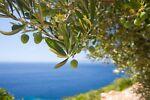 AGRIFOOD Eccellenze Siciliane