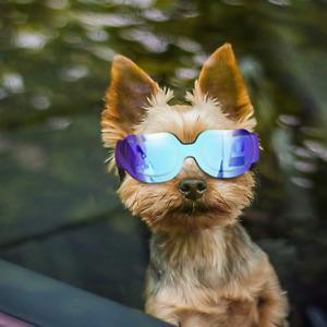 Enjoying Small Dog Sunglasses - Dog Goggles for UV Protection Sunglasses with -