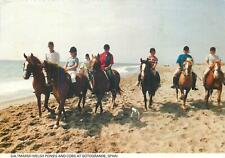 Saltmarsh Welsh ponies and cobs at Sotogrande Spain postcard