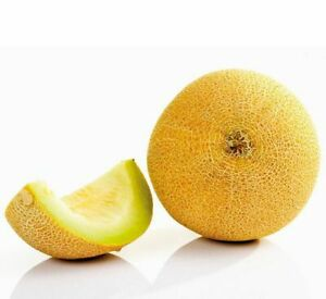 Cantaloupe Seed 10 Seeds Cucumis Melo Var. Saccharinus Sweet Fruit Seed B106 Hot