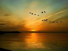 GEASE BIRD FORMATION SUNSET LAKE PHOTO ART PRINT POSTER PICTURE BMP209A