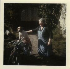 PHOTO ANCIENNE - VINTAGE SNAPSHOT - ANIMAL CHIEN MOBYLETTE MOTO DRÔLE -DOG FUNNY