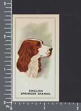 English Springer Spaniel dog Dogs Heads by G.P. Tea card #4