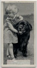 Newfoundland Dog With Young Child 1930s Ad Trade Card