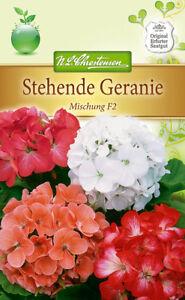 Stehende Geranie, Mischung F2 - Pelargonium zonale, Samen, 5205