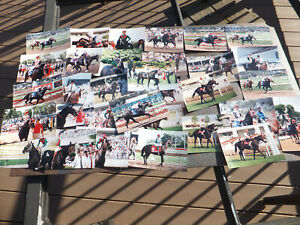 """22 Photos Champion Thoroughbred Race Horses - Star of Cozzene & Sultry Song 4x6"""""""
