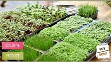Microgreens Seed Collections -21 varieties of seeds choice Vegetable/Herb/Garden