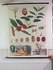 LOVELY VINTAGE PULL DOWN ROLL DOWN BOTANICAL SCHOOL WALL CHART OF COFFEE PLANT