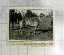 1905 Hundred To 1 Win Of The Waterloo Cup Wh Pawson Pistol Ii