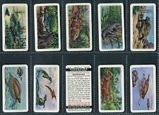 "BROOKE BOND CANADA 1963 ""DINOSAURS"" TEA CARDS - PICK YOUR CARD"