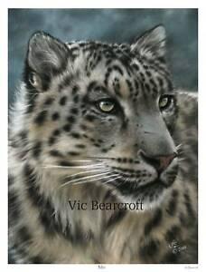 'Mizi'. Limited Edition Snow Leopard Print by Vic Bearcroft