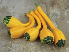 GOURD SMALL SPOON 75 FINEST SEEDS