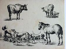 Gravure originale étude d'animaux CHIENS CHEVAL VACHES BERGER XIXéme