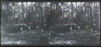 Foresta Francia c1930 Foto Negativo Placca Da Lente Vintage VR16L8n15