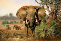 Elephant Grassland Landscape Oil painting HD Giclee Printed on canvas P142