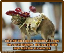 Funny Chihuahua Jalapeno Dog Life Is Not Refrigerator / Tool Box  Magnet