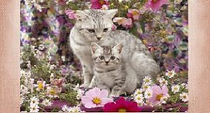 PRETTY LOVE KITTY CAT KITTEN CHECKBOOK COVER LOT CHOICE pink purple personalize