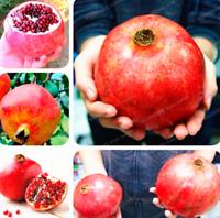 Giant Pomegranate Bonsai Fruit Tree Super Sweet Home Garden 20 PCS Seeds 2020 M