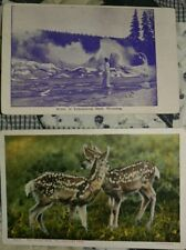2 early 1900s postcards of Yellowstone Park, Wyoming