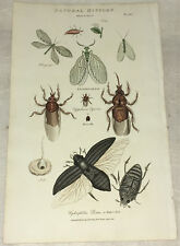 Hand-color Nature Engraving  PANTOLOGIA 1813 Entomology Horse-Fly Water-Clock