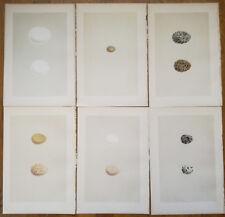 Morris Lot of 6 Prints Bird Egg Snowy Owl - 1875