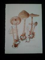 Grande aquarelle signée planche botanique champignons lépiote parfait état