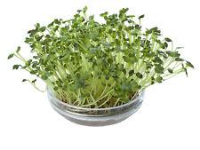 Bio-Microgreens Anzuchtset Küchenmix 19910 Sprossen Komplettset Sämereien