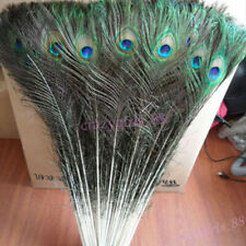 10Pcs Real Natural Peacock Tail Feathers 10-12inch Home Room Decor DIY Wholesale