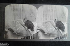 STA959 Scène de genre Chien lit fillette chambre Photo 1900 STEREO stereoview