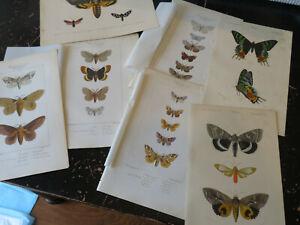 Moth/Butterfly - D' Orbigny D' Histoire Naturelle,  Paris ca:1840 8 plates