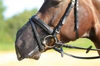 Busse Fliegen-Nasenschutz, Nüsternschutz, FLY PROTECTOR schwarz in Pony/VB