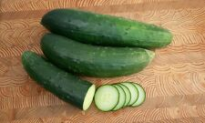 Marketmore 76 Slicing cucumber 100 seeds * Heirloom * Non GMO * CombSH G36
