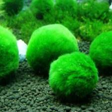 Giant Marimo Moss Ball Cladophora Live Aquarium Plant Fish Aquarium Decor~