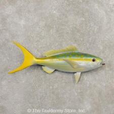 """#20348 E+   21"""" Yellowtail Snapper Replica Taxidermy Fish Mount For Sale"""