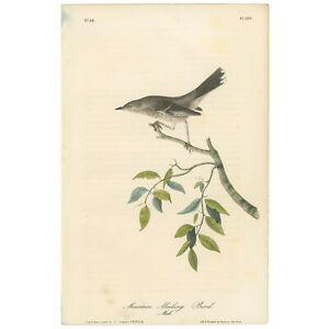 Audubon Octavo 1st Ed 1840 hand-colored litho Pl 139 Mountain Mocking Bird