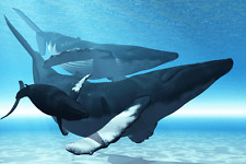 "Whales - Wildlife Animals Photo Art - Canvas Giclee Print 24"" x36"""